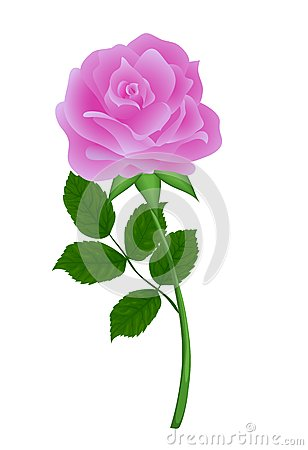 Nature pink flower rose