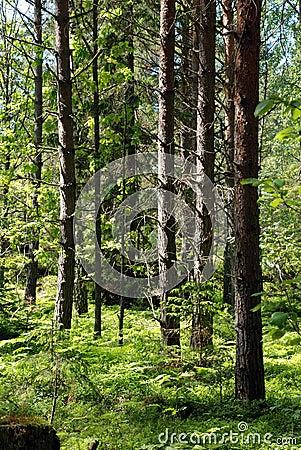 Nature Reserve Ingar.