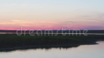 Nature of Russia: bird island at sunset, flight of seagulls against a pink sky, aerial view clips vidéos