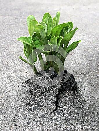 Nature s Breakthrough