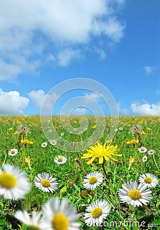 Free Nature S Glory Stock Image - 1165471