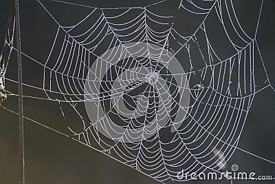 Nature s own artwork, cobweb