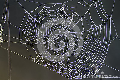 Nature s own artwork, cobweb