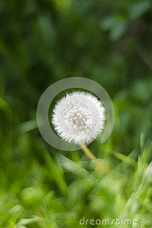 Free Nature`s Simplicity Royalty Free Stock Photography - 25041187