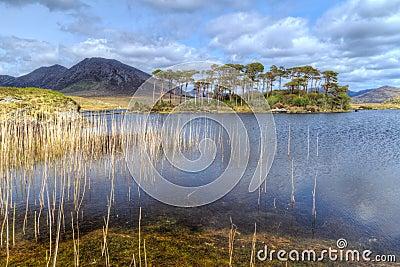 Nature scenery of Connemara