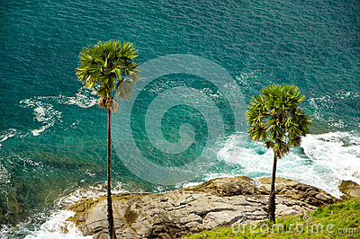 Nature of the sea, palm trees