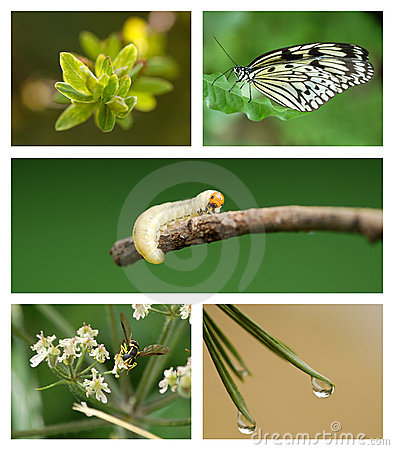 Free Nature Set Royalty Free Stock Photography - 19982667