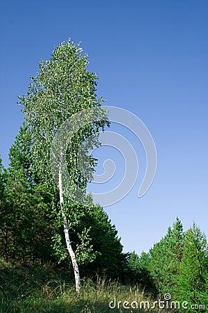 Nature of Siberia