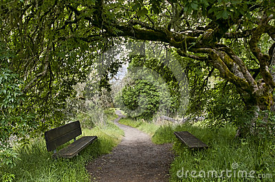 Nature trail with bench