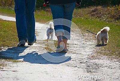 Nature trail dog walk