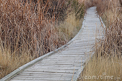 Nature trail in wetland