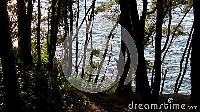 nature tranquillité Relaxation méditation clips vidéos