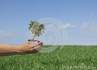 Nature tree.