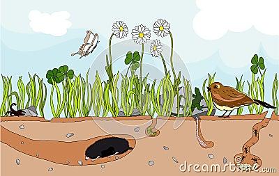 Nature underground