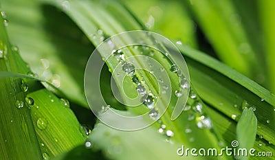 Nature verte de fond
