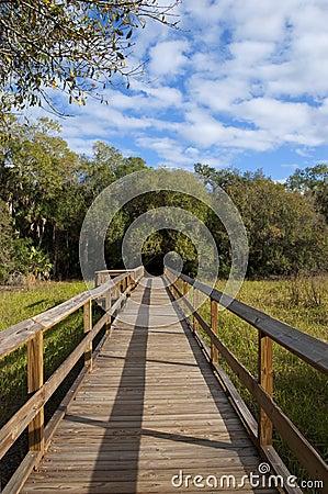 Free Nature Walk Bridge Stock Photo - 22667370