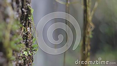 Natureza da selva Cachoeiras e plantas filme