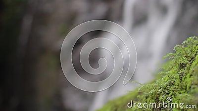 Natureza da selva Cachoeiras e plantas vídeos de arquivo