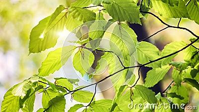 Naturhintergrund mit Grün verlässt am sonnigen Tag 4K stock video footage