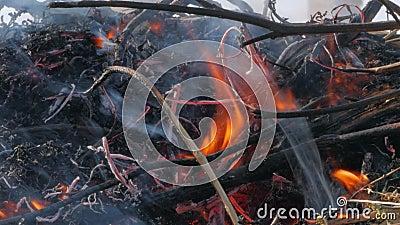 Natuur brandwonden, struiken, boomtakken, groen gras, droge rietbrandwonden met een krachtige vlam in een fractie van een seconde stock footage
