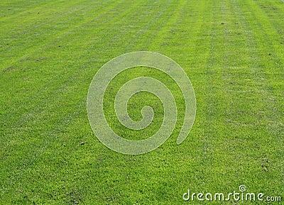 Natuurlijk gras royalty vrije stock foto 39 s afbeelding 14640408 - Verkoop synthetisch gras ...