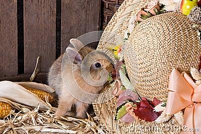 Naughty bunny