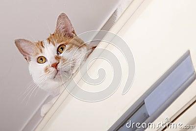Naughty cat close-up