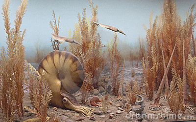 Nautilus and belemnites in the ancient seas