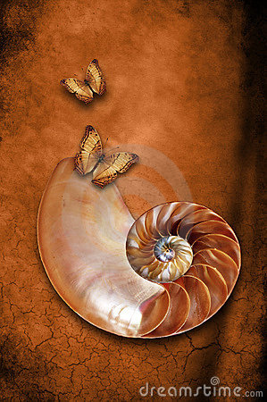 Nautilus with butterflies