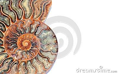 Nautilus fossile