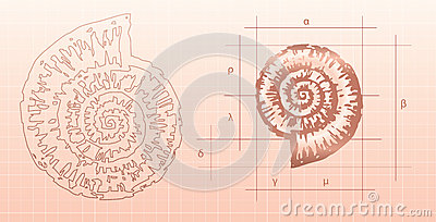 Nautilus graphic