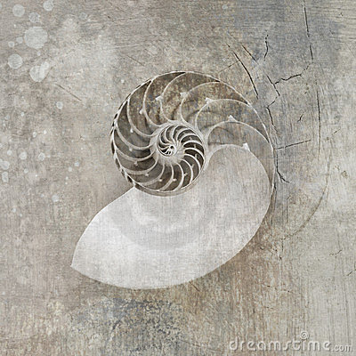 Free Nautilus Seashell Royalty Free Stock Photos - 23534408