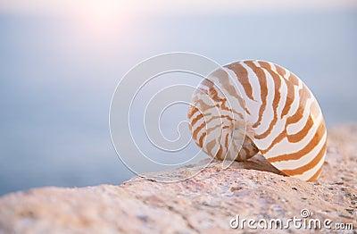 Nautilus seashell sand on sunrise and ocean