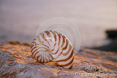 Nautilus seashell sand on sunrise and ocean