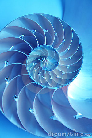 Free Nautilus Shell Stock Image - 6330891