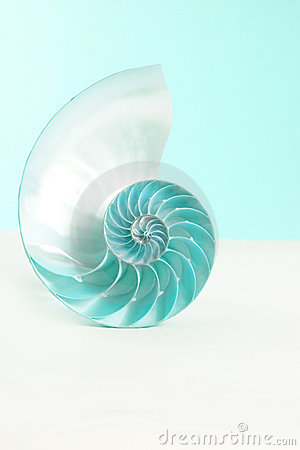 Free Nautilus Shell Royalty Free Stock Images - 9508309
