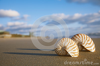 Nautilus shell on beach  and blue sea