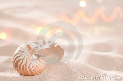Nautilus shell on beach sand
