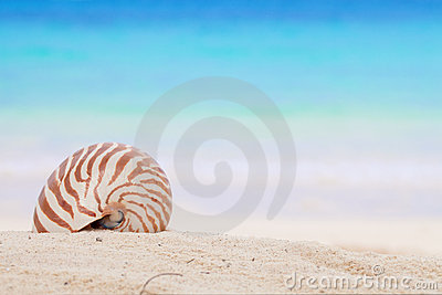 Nautilus shell on a beach sand, against blue sea