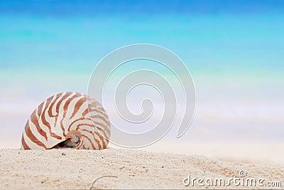 Nautilus shell on a beach sand, against blue sea