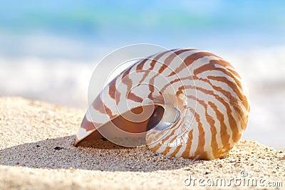 Nautilus shell on a beach sand, against sea