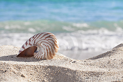 Nautilus shell on a beach sand, against sea