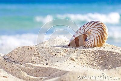 Nautilus shell on a beach sand, against sea waves