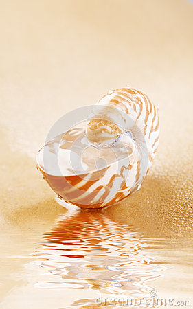 Nautilus shell full of water in sea sand