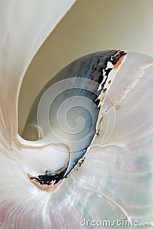Nautilus Shell Macro
