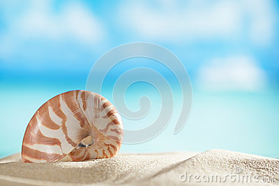 Nautilus shell  with ocean , beach and seascape