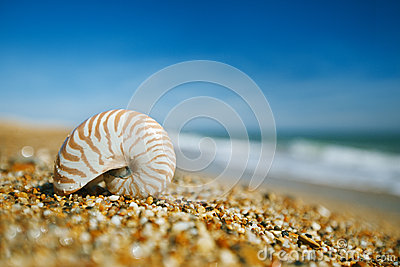 Nautilus shell on peblle  beach and sea waves