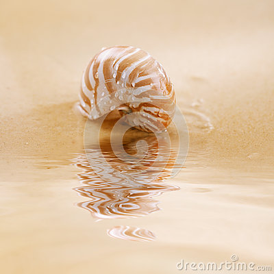 Nautilus shell on ripple sea water and sand