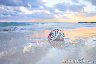 Nautilus shell on sea beach , sunrise.
