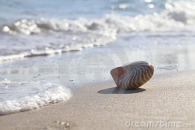 Nautilus shell silhouette backlit on sea beach